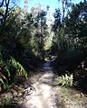 Berowra Walking Trail (9).jpg