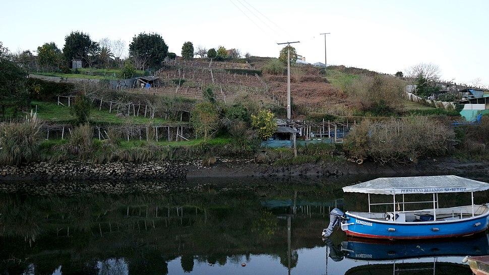 Betanzos Río Mendo e Mandeo 8