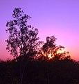 Bhawal National Park 05.jpg