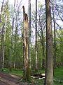 Białowieski Park Narodowy 11.jpg