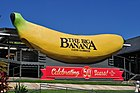 Big Banana 50 Years.jpg