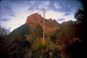 Big Bend National Park BIBE1372.jpg