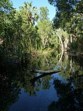 Bitter Springs thermal pools, Elsey National Park, near Mataranka - panoramio.jpg