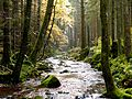 Black Forest- Stream (10562132523).jpg