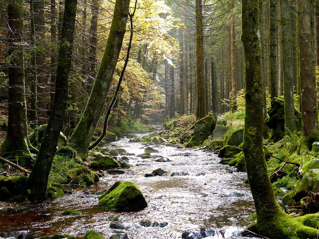 fileblack forest stream 10562132523jpg wikimedia