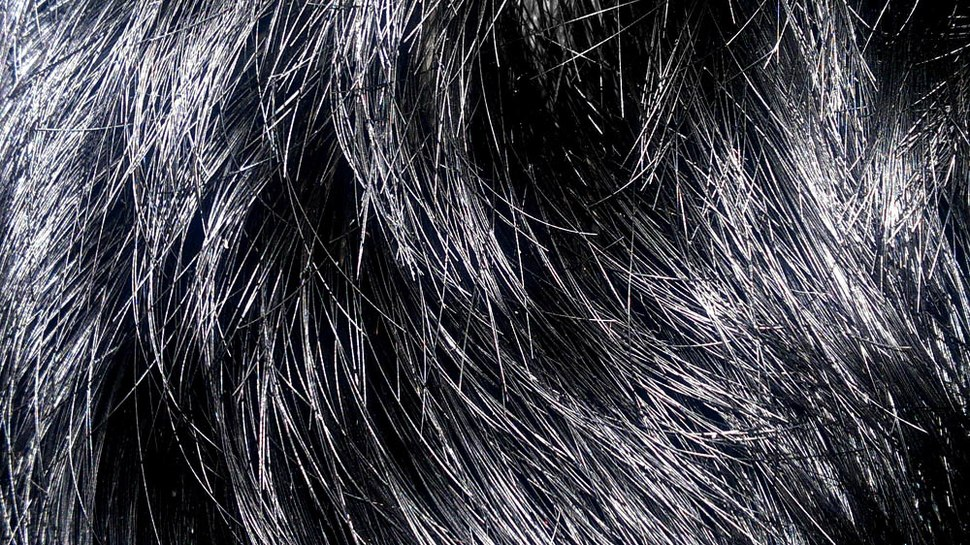 Blackhair10