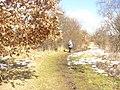 Blankenfelde - Feldweg (Country Path) - geo.hlipp.de - 34392.jpg