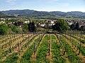 Blick vom Mauracher Berg über Denzlingen 5.jpg