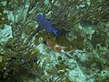 Blue Tang and Squirrelfish.jpg