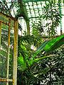 Botanička bašta Jevremovac, Beograd - unutrašnjost staklene bašte.jpg