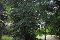 Botanic garden limbe143.jpg