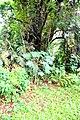 Botanic garden limbe23.jpg