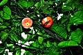 Botanic garden limbe47.jpg