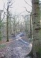 Bridle path - geograph.org.uk - 1124920.jpg