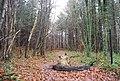 Bridleway in Pembury Woods - geograph.org.uk - 1065302.jpg