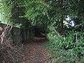 Bridleway through The Rough near Heath End - geograph.org.uk - 1455644.jpg