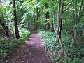 Bridleway to Tollard Green - geograph.org.uk - 1347339.jpg