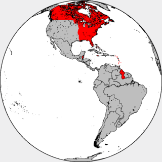 British colonization of the Americas American Colonies of England and then Great Britain and the United Kingdom