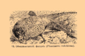 Brockhaus and Efron Encyclopedic Dictionary b33 074-0- 13 - Phasianus colchicus.png