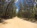 Brooman NSW 2538, Australia - panoramio (102).jpg