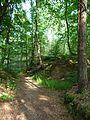 Buchholzer Forst Waldweg 03.JPG