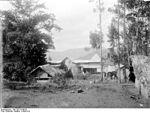 Une plantation en 1906