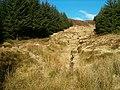 Burn and boundary - geograph.org.uk - 128477.jpg