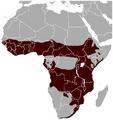 Bushbuck Tragelaphus scriptus distribution map.png