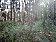 Bushland at Mount Kembla