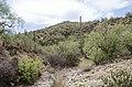Butcher Jones Trail to Pinter's Point Loop, Tonto National Park, Saguaro Lake, Ft. McDowell, AZ - panoramio (173).jpg