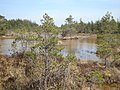 Cерные болота - panoramio.jpg