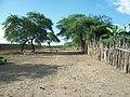 Camellon nerviti Bolivar - panoramio.jpg
