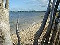 Caminho da Orla de Jijoca - panoramio.jpg