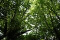Canopy of trees over River Arun at Nuthurst, West Sussex, England.jpg