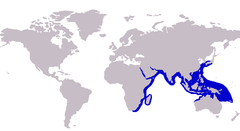 Approximate range of the coastal trevally
