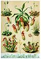 Carnivorous plant.jpg