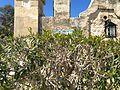 Castel Bertrand Hidden name.jpg