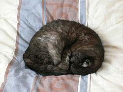 U�o�enia kota podczas snu w celu zmniejszenia utraty ciep�oty cia�a