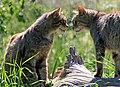 Cat friends.jpg