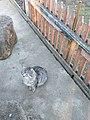 Cat in Subotivka.jpg
