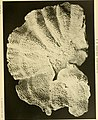 Catalogue of the madreporarian corals in the British Museum (Natural History) (1893) (20582958345).jpg
