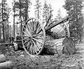 Caterpillar tractor yarding with yokes, Forest Lumber Company, Pine Ridge, ca 1925 (KINSEY 2298).jpg