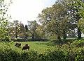 Cattle, Hele Bird Farm - geograph.org.uk - 1863820.jpg
