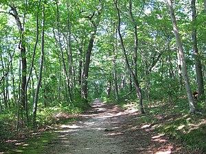 Caumsett State Historic Park Preserve - A path through the woods at Caumsett State Historic Park Preserve