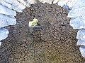Cava de l'Habitació (Agres) - 03.JPG