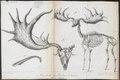 Cervus megaceros - skelet - 1826 - Print - Iconographia Zoologica - Special Collections University of Amsterdam - UBA01 IZ21500122.tif