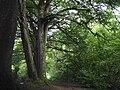 Chemin boisé le long de l'Aber Wrac'h.jpg