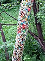 Chewing Gum Tree.jpg