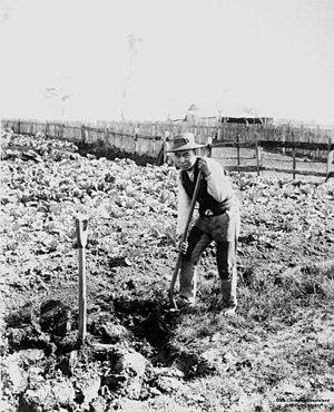 Market garden - Chinese market gardener in Australia, ca. 1893