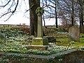 Churchyard snowdrops - Sampford Arundel - geograph.org.uk - 1751278.jpg